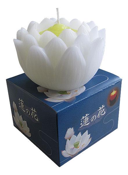 ローソク 蓮の花の写真