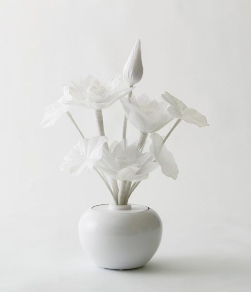 botanica 蓮 Wの写真