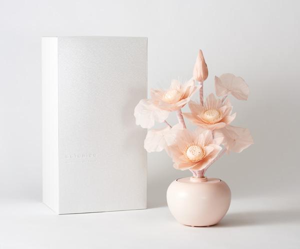 botanica 蓮 Pギフト箱入の写真