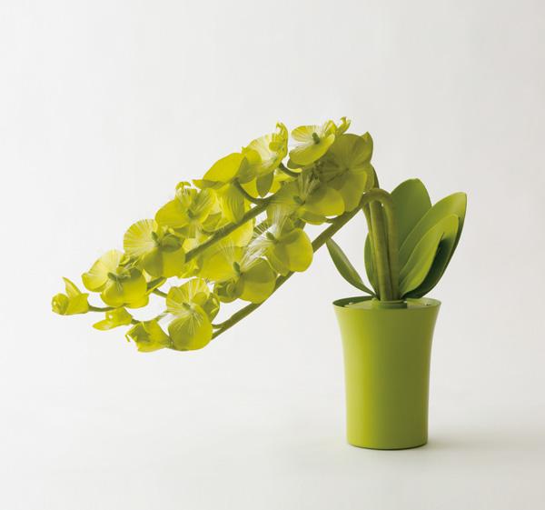 botanica 蘭 Gの写真