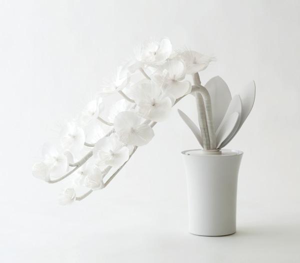 botanica 蘭 Wの写真
